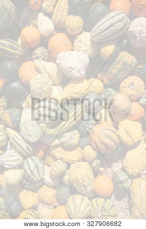 Gourds. Background image of colorful gourds and pumpkins. room for text overlay. autumn fruits and vegetables for backgrounds and artworks.