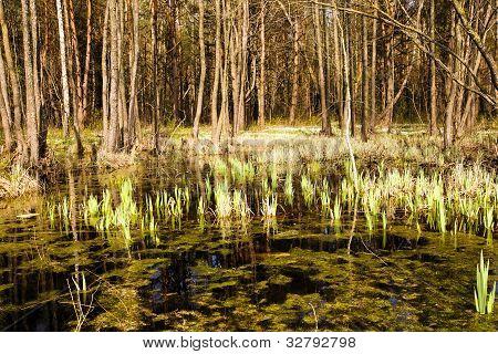 bog (spring)