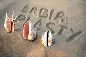 vagina-shaped seashell on the background of the inscription labiaplasty. female health concept poster