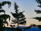 Lake Tahoe Sunrise Through trees Dl Bliss State Park poster