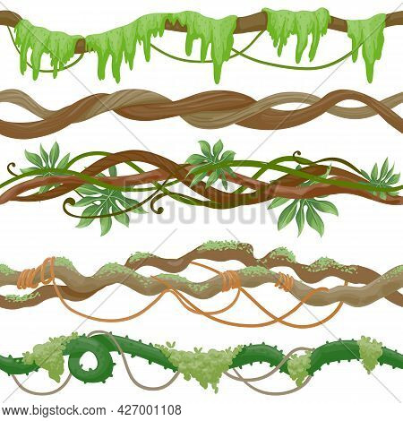 Seamless Jungle Vine On Branch. Wild Tropical Tree With Liana, Leaves And Moss. Green Creeper Plant