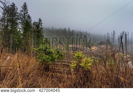 View After The Mountain Wind Of The Bialki Valley In The Tatra Mountains Near Zakopane. A Hazy Sprin