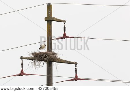 One White Stork (ciconia Ciconia) Standing On Nest On Electricity Pylon With Cloudy Sky