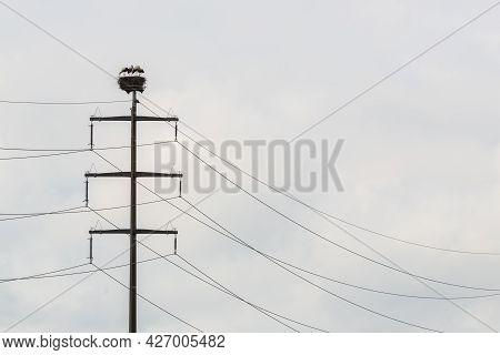 Four White Storks (ciconia Ciconia) In Nest On Electricity Pylon In Cloudy Sky