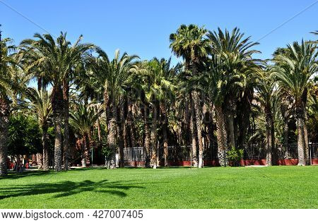 Beautiful Park With Green Treasure And Huge Palm Trees In Morro Jable, Fuerteventura, Canary Islands
