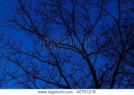 Bare Tree And Blue Sky
