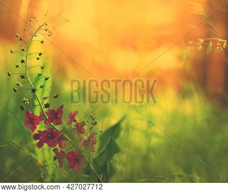 Floral Background. Natural Background In Orange-green Tones. Red Wild Flower.flower In The Forest .f