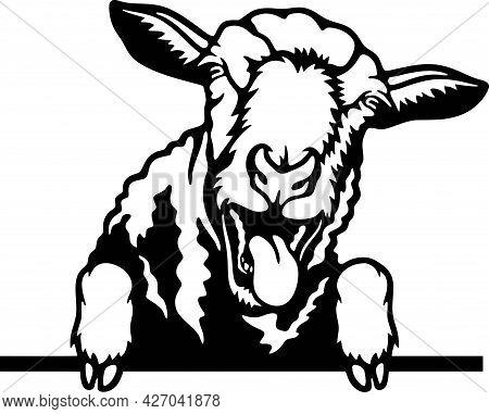 Peeking Sheep - Funny Farm Animals Peeking Out - Face Head Isolated On White