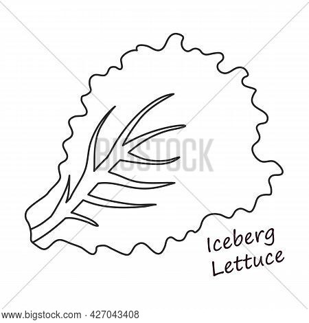 Lettuce And Salad Outline Vector Of Icon.outline Vector Illustration Leaf Of Lettuce. Isolated Illus