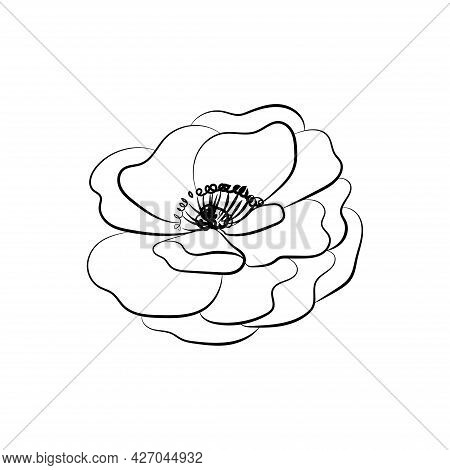Summer Garden Blooming Flowers Monochrome Illustration, Sketch, Hand Drawn
