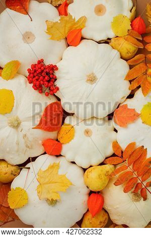 White Pumpkins Squash And Bright Foliage Leaves - Autumn Seasonal Holiday Background, Thanksgiving,