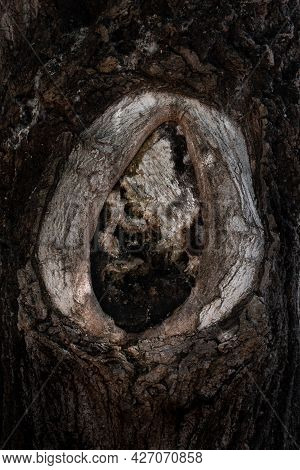 Close-up Of Tree Hollow Formed On Trunk Of Old Poplar