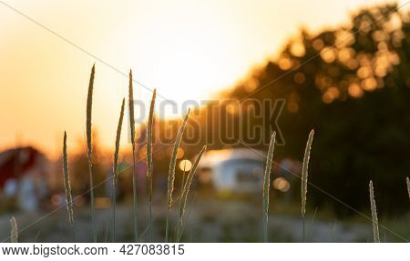 Amazing Good Sunny Beach Vibes. Dead Dry Grass In The Front. Cocktail Bar On The Back In The Bokeh.