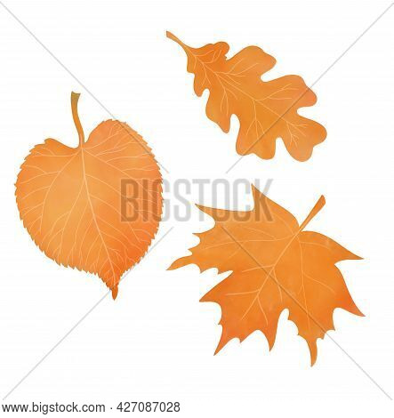 Set Of Three Withering Autumn Leaves. Watercolor Aquarelle Technique. White Background. Isolated Lea