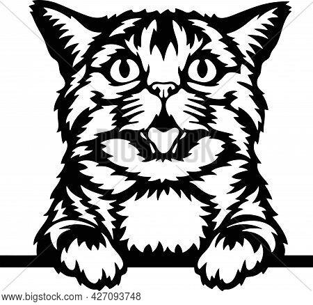 Peeking Cat - Funny Farm Animals Peeking Out - Face Head Isolated On White