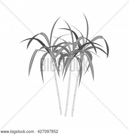 Vector Design Of Palm And Cane Icon. Web Element Of Palm And Plant Vector Icon For Stock.