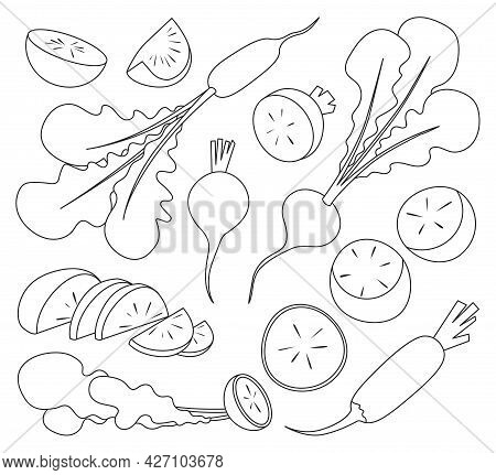 Red Radish Vector Outline Set Icon. Vector Illustration Vegetable On White Background. Isolated Outl