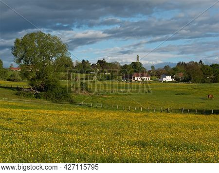 Buttercup And Green Fields Are The Illustration Of France Backcountry With Colors Of Spring