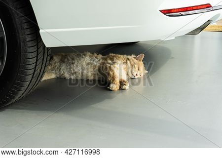 The Cat Is Sleeping Or Resting In The Shade Of A New Car. Animal Under The Car.