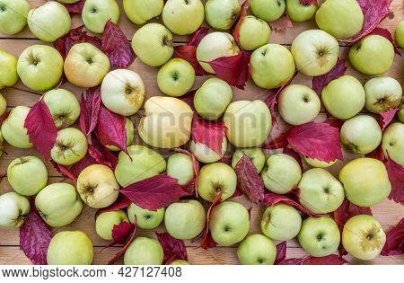 Ripe Apples And Red Fallen Leaves Are Lying On Wooden Table. Harvesting In Orchard. Top Of View