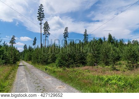 Road In Forest. Forest Footpath. Czech Republic.