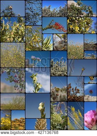 Collage With 31 Species Of Blue Sky Backed Southern California Indigenous Plants In Their Native Hab