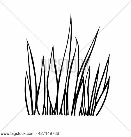 A Bunch Of Grass. Hand Drawn Simple Black Outline Vector Illustration In Doodle Style, Isolated On W