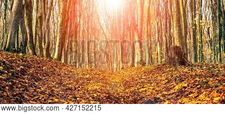 Autumn Forest With Fallen Leaves On The Road In Sunny Weather