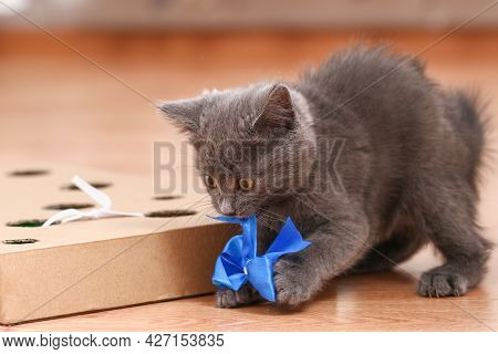 A Little Kitten Plays With An Interactive Handmade Toy. Cardboard Box With Holes With Cat Toys Insid
