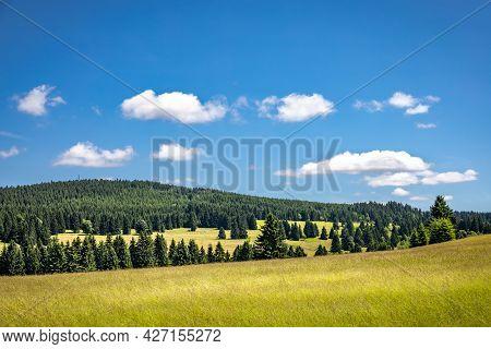 Summer Green Meadows Among Spruce Forests Under Blue Sky - Czech Republic, Europe