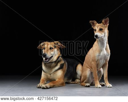 Two Dogs Together On The Floor, Mixed Breed. Happy Pets In The Photo Studio.