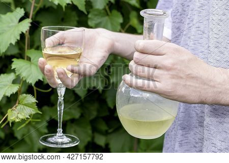 The Winemaker Holds A Glass And A Bottle Of White Wine Against The Background Of Grape Bushes