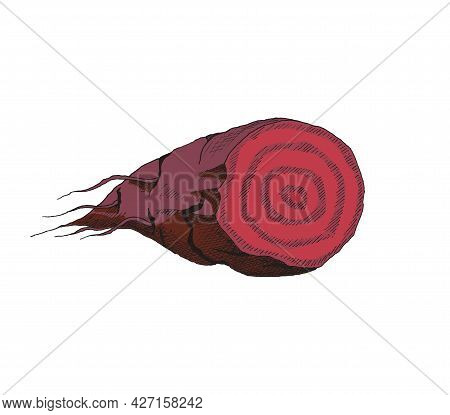 Hand Drawn Color Vector Illustration Of Half Sugar Beet. A Piece Of Sliced Beetroot In Vintage Style