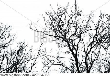 Silhouette Dead Tree On White Sky Background For A Peaceful Death. Despair And Hopeless Concept. Sad