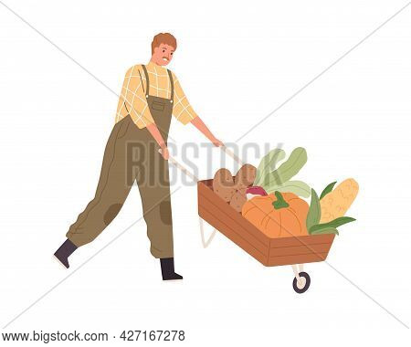 Farmer Pushing Wood Wheelbarrow With Autumn Harvest. Farm Worker Going With Garden Cart With Organic