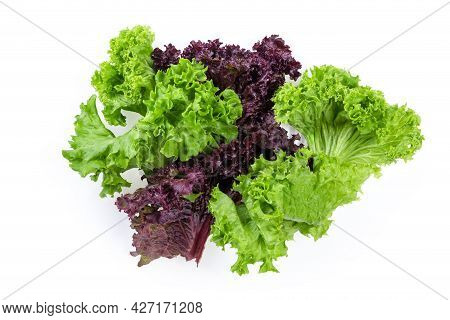 Lettuce Leaves Two Varieties - Red Lollo Rosso And Pale Green Lollo Bionda On A White Background, To