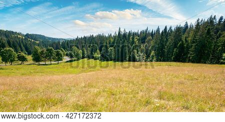 Mountainous Countryside In Summer Panorama. Trees On The Meadow Along The Road. Coniferous Forest On