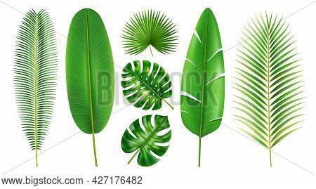 Exotic Foliage And Tropical Leaves, Isolated Set Of Flora In Different Shapes And Positions. Branche