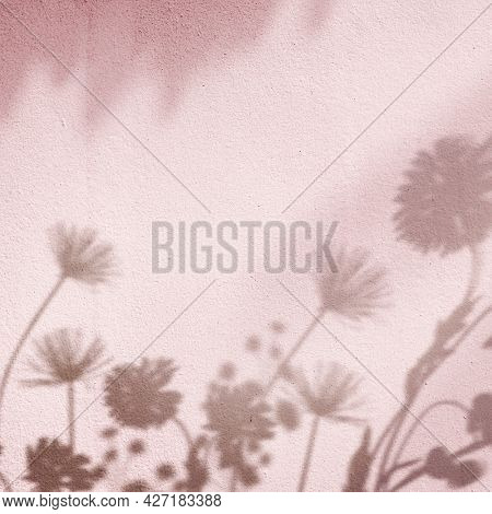 Pink background with floral field shadow
