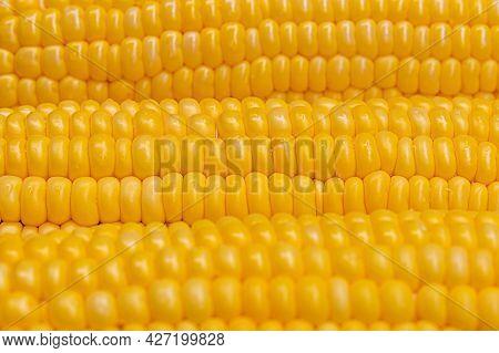 Macro Photo Of Yellow Corn. Food Background. Selective Focus. Corn Seeds Close Up.
