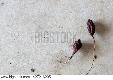 Dried Vegetables Radishes On The Concrete Floor Flat Lay Minimalist And Modern Art Background