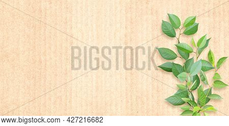 Green leaves on cardboard texture. Horizontal banner with eco paper texture. Paper cardboard background. Recycled carton material and green leaf. Copy space for text. Mock up template