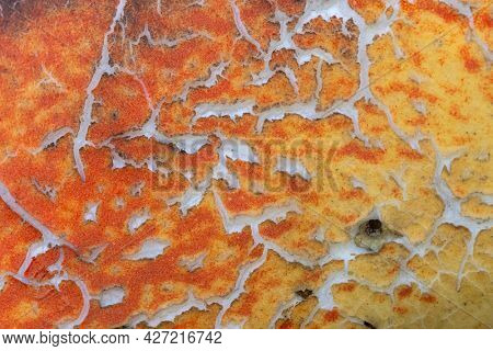 Extreme close up shot of weathered   swimming float surface