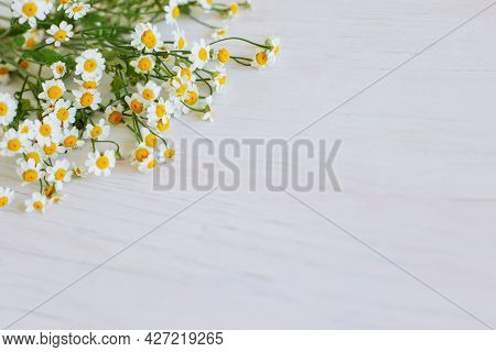 Beautiful Daisy Flowers On A White Wooden Background. Flat Lay. Place For Text.