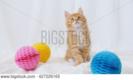 Kitten Cuddling With A Small Ball. Cute Ginger Kitten Playing With Ball. Cute Funny Home Pets
