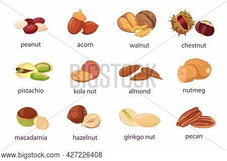 Cartoon Nuts. Walnut, Hazelnut, Pistachio And Peanut Icon. Healthy Organic Almond, Acorn, Ginkgo And