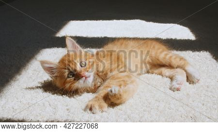 Ginger Kitten Is Basking In The Lights Of A Sun And Shadows. Ginger Cat Sleeping, Daytime Cat Sleep.