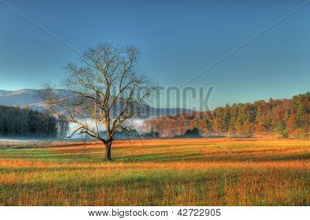 Morning at Cades Cove Tennessee