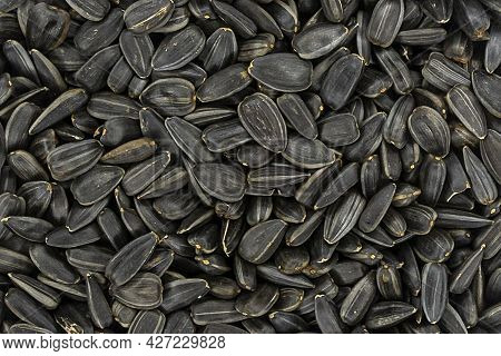 Black Sunflower Seeds. Black Sunflower Seeds For Texture Or Background. Black Sunflower Seeds Macro