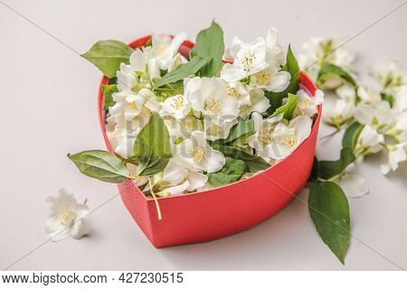 Bouquet Of Jasmine In Gift Box. Valentins Day. Top View With Copy Space For A Text. Flowers Congratu